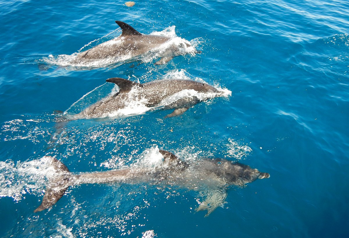 Dolphins enjoying the calm conditions